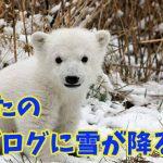 あなたのブログに雪が降る!季節感漂うJetpackの隠れ機能を紹介!